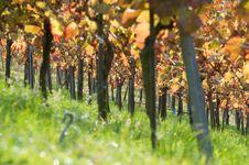 Free Vine Stock Photos - 17362263
