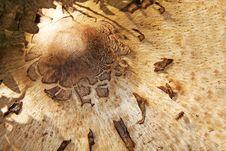 Free Macro Mushroom Royalty Free Stock Photos - 17362568