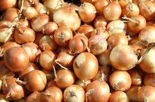 Free Background  Of Onions Royalty Free Stock Photography - 17364447