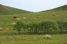 Free Horses Royalty Free Stock Photo - 17364905