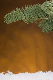 Free Spruce Branch Royalty Free Stock Photography - 17364987