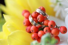 Wedding Rings On The Flowers Stock Images