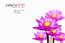 Free Pink Water Lily Stock Photography - 17366992