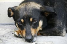 Free Doggy Royalty Free Stock Photos - 17369858