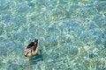 Free Floating Royalty Free Stock Photo - 17371875