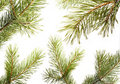 Free Fur-tree. Part Christmas-tree. Isolated. Set Royalty Free Stock Photos - 17378028