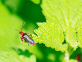 Free Close Up Of The Beetle Sitting On The Leaf Royalty Free Stock Photo - 17378145