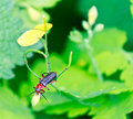 Free Close Up Of The Beetle Sitting On The Leaf Royalty Free Stock Photos - 17378958