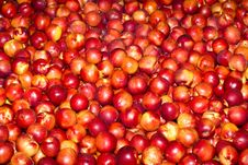 Free Red Nectarines Royalty Free Stock Photo - 17372605