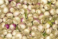 Free White Turnip Vegetables Royalty Free Stock Images - 17372649