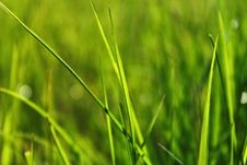 Free Green Grass Stock Photo - 17372850