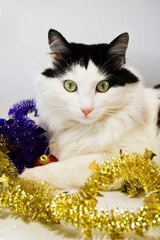 Free Cat Stock Photo - 17373050