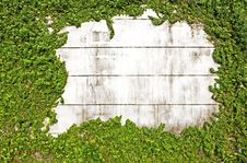 Free Green Leaves On Old Brick Wall Royalty Free Stock Photo - 17373105