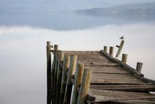 Free Old Broken Pier With Seagull Royalty Free Stock Photography - 17373507