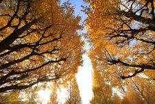 Free Japan Autumn Stock Images - 17373714