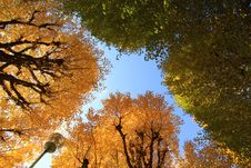 Free Japan Autumn Stock Photography - 17373722