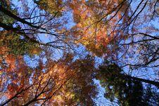 Japan Meple Autumn Stock Photos