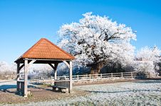 Free Ice Covered Shelter And Oak Tree. Stock Photo - 17374270