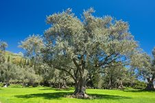 Free Landscape Stock Images - 17374314