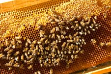 Bees At Home Stock Image