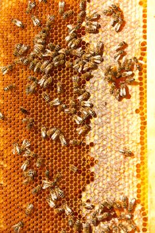 Worker Bees Stock Photo