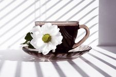 Free Mug Of Hot Morning Coffee And A Flower Royalty Free Stock Photography - 17375537