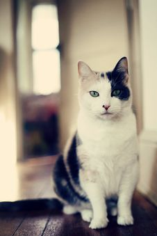 Free Calico In Hallway Stock Images - 17375944