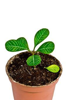 Free House Plant Royalty Free Stock Photo - 17377405
