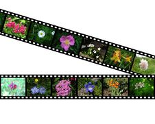 Free Films With Images Of Flowers Royalty Free Stock Image - 17378726
