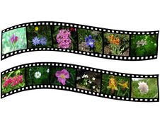 Free Pair Of Films With Images Of Flowers Stock Photo - 17378750