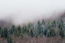 Forest And Mist Stock Photography