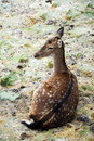 Free Deer Royalty Free Stock Photography - 17380067