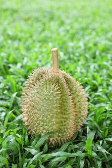 Free Durian Royalty Free Stock Image - 17383046