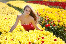 Free Attractive Woman In Tulip Field Royalty Free Stock Photography - 17386187
