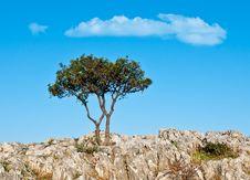 Free Lone Tree On Rocks Stock Photos - 17387783