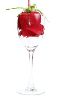 Red Rose In A Glass Goblet Royalty Free Stock Photos