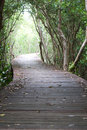 Free Footpath Between Mangrove Forest Royalty Free Stock Images - 17390079