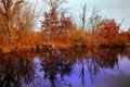 Free Fall Reflections Royalty Free Stock Photo - 17390715