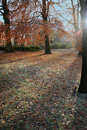 Free Winter Sun Stock Photography - 17390822