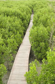 Free Footpath Between Mangrove Forest Royalty Free Stock Images - 17390119