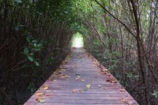 Free Footpath Between Mangrove Forest Stock Photos - 17390173