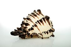 Free Black And White Clam With Clipping Path Stock Photography - 17391852
