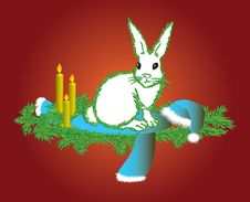 Free The White Hare Royalty Free Stock Image - 17393836