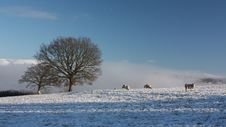 Free Snow Covered Field With Sheep Stock Photos - 17394273