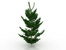 Free Big Christmas Tree №1 Royalty Free Stock Images - 17396309