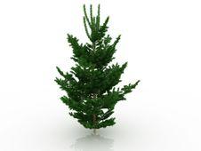 Free Big Christmas Tree №3 Stock Photo - 17396330