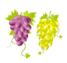 Free Two Tassels Of Grape Stock Photography - 17397632