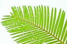 Free Leaf Royalty Free Stock Photos - 17399068