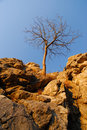 Free Isolated Tree On The Rocks Royalty Free Stock Images - 1747429