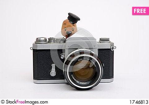 Free Look At Birdie Stock Photos - 1746813